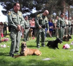 imagen Emotiva despedida a un perro policia