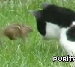 imagen gato vs ardilla