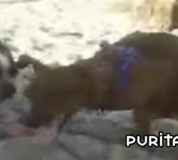 imagen perro pajeandose solo