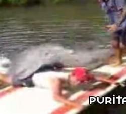 imagen el delfin calentorro