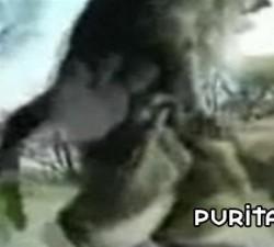 imagen porno en un parque de animales