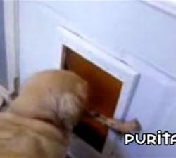 imagen salida para perros
