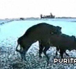 imagen el toro enamorado