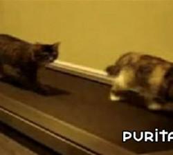 imagen gatos deportistas