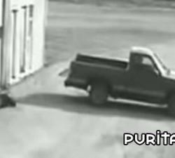 imagen el ladron que no podia huir