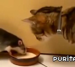 imagen jugando al gato y al raton