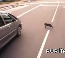 imagen el gato de acero