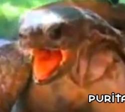imagen tortuga en pleno extasis